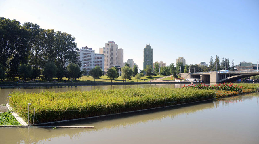 Rice plants on the Potong River
