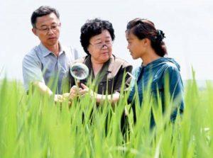 Yu Son Ok ( middle ).