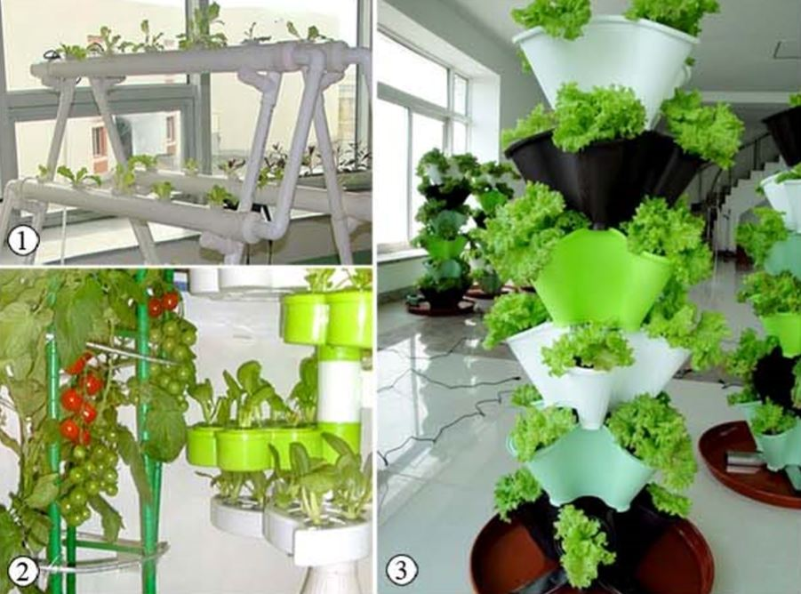 1. Pipes are used for vegetable cultivation. 2. Fruit vegetables are raised on racks. 3. Vegetables are grown in pots.