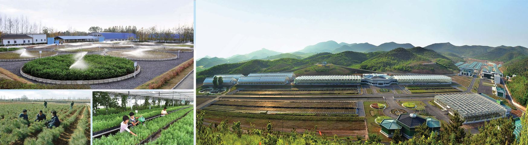 Tree Nursery No. 122 of the Korean People's Army and other tree nurseries built in all parts of the country ensure the solid material and technological foundations for sapling produ